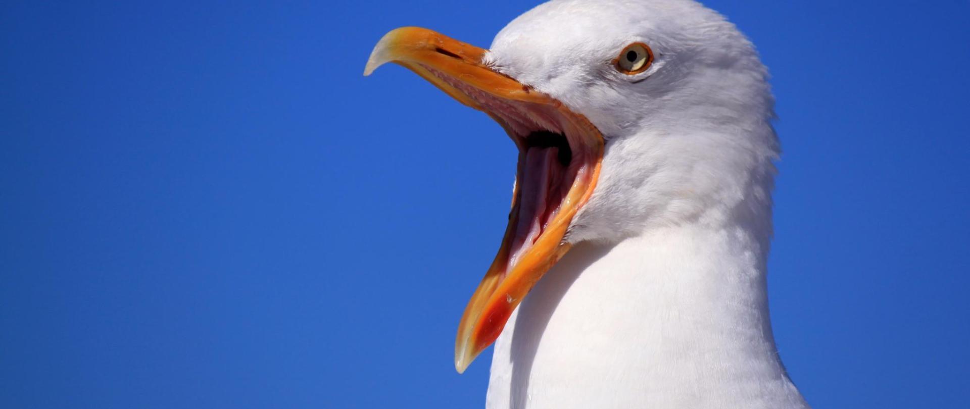 seagull-249638.jpg