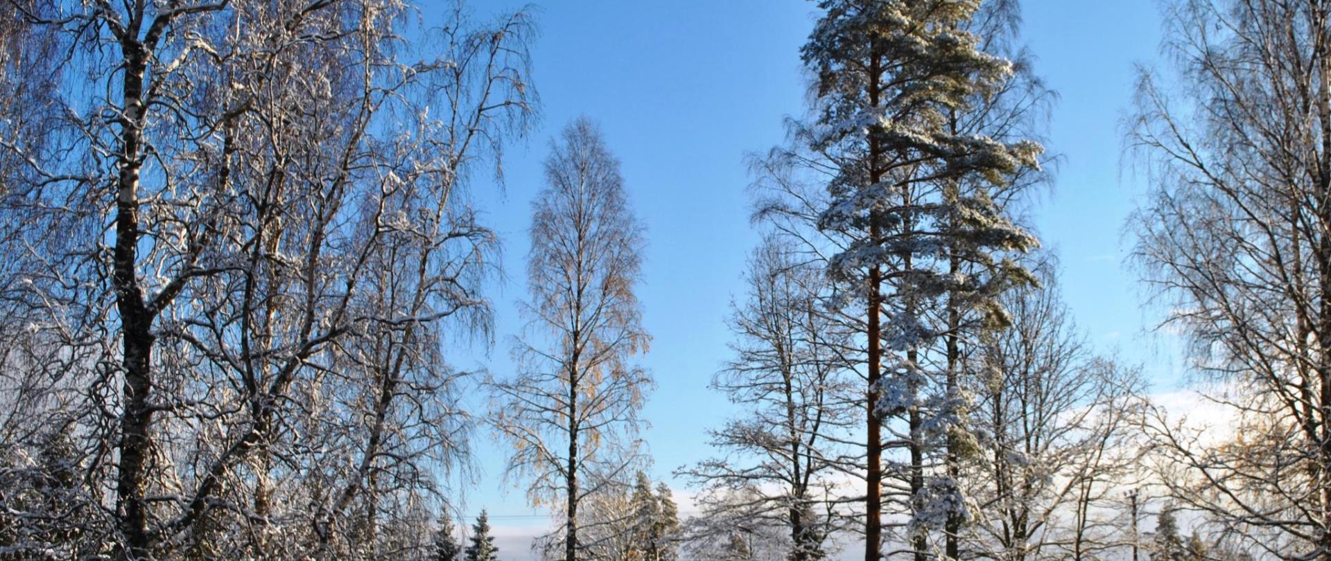 Eerste sneeuw met blauwe lucht DSC_4753.JPG