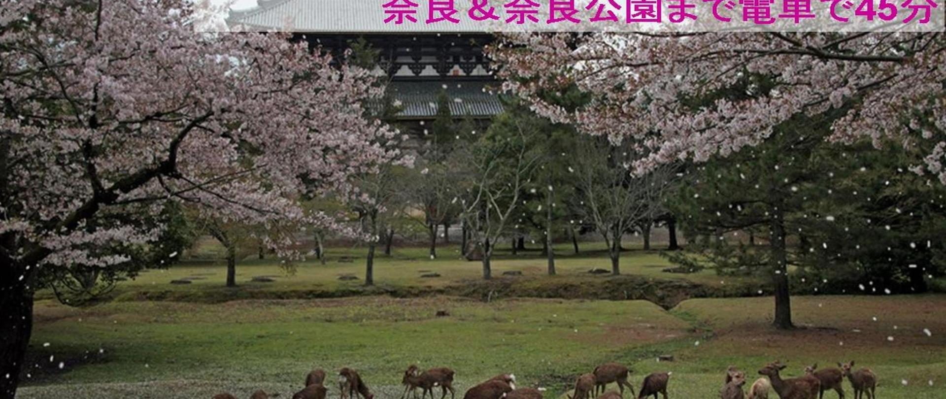 6-9.アクセス 奈良.jpg