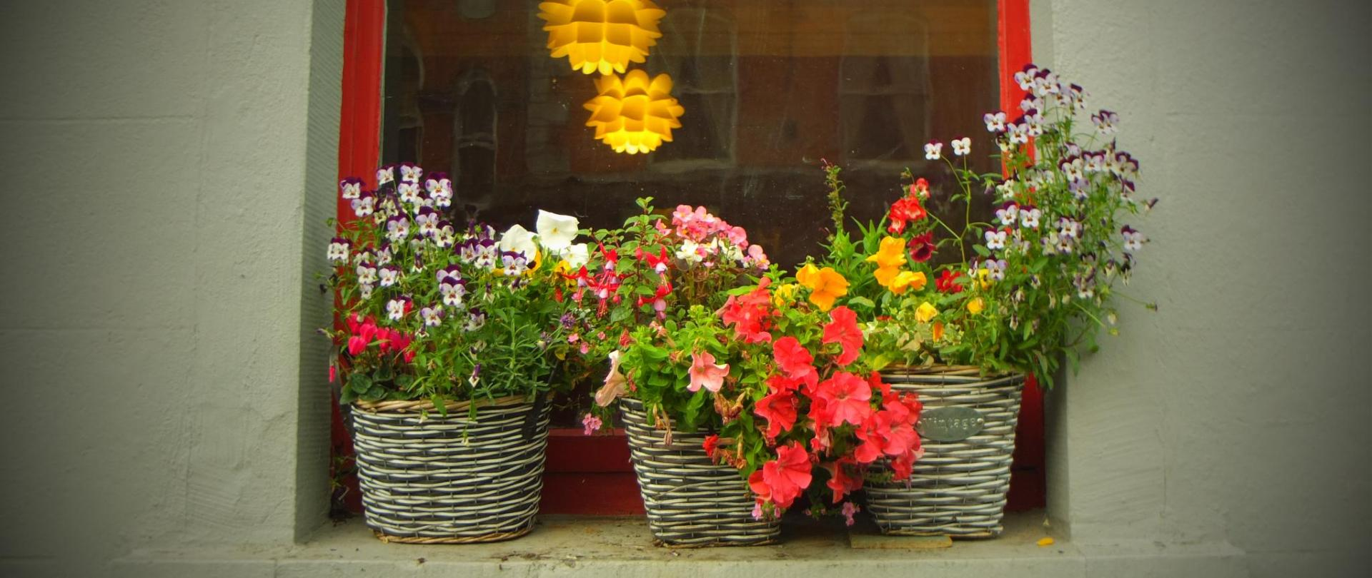 Hostel Window baskets.JPG