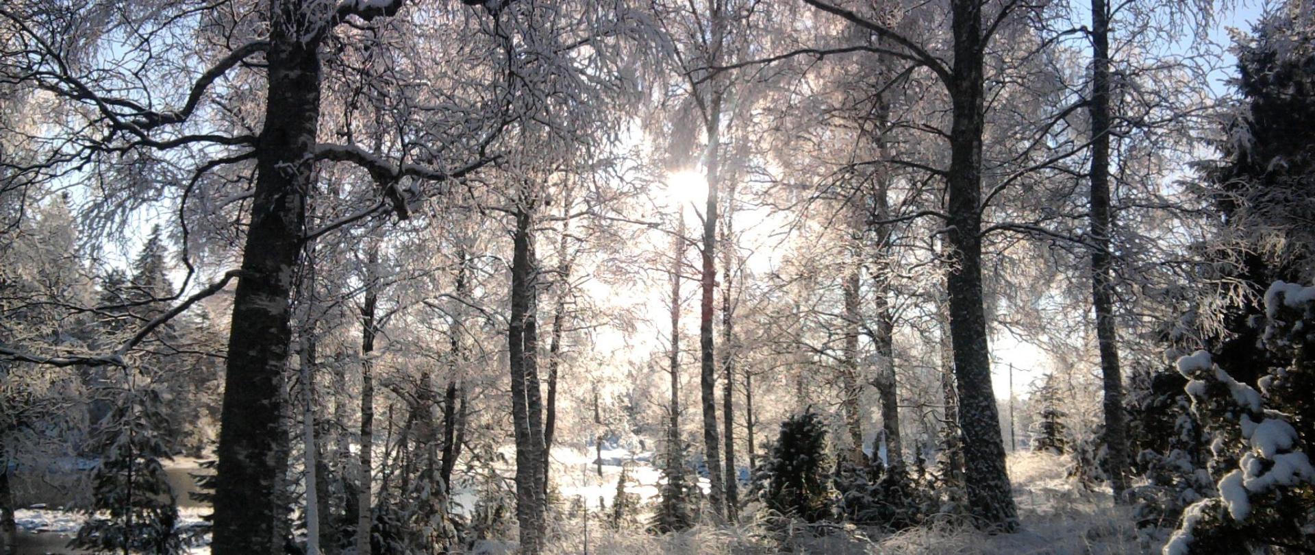 By the lake winter.jpg
