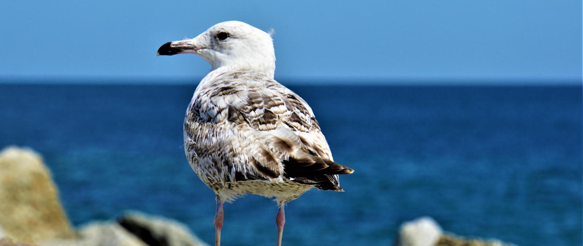 seagull-4263086.jpg