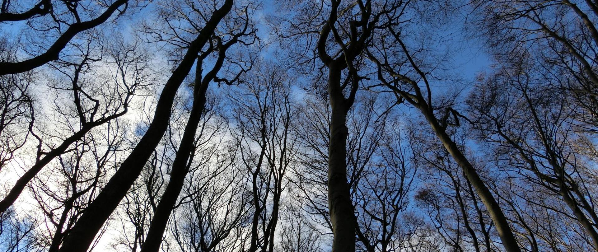 forest-584354.jpg