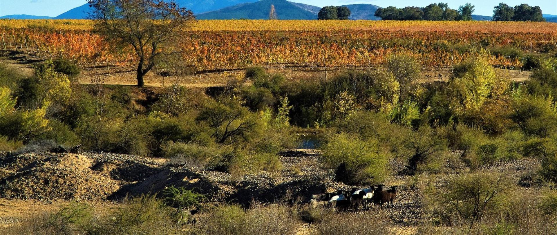 paisaje corderos baja.jpg