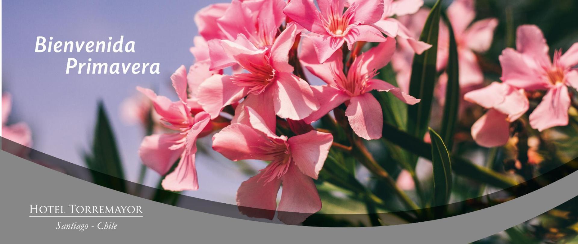 primavera-web-prov.jpg