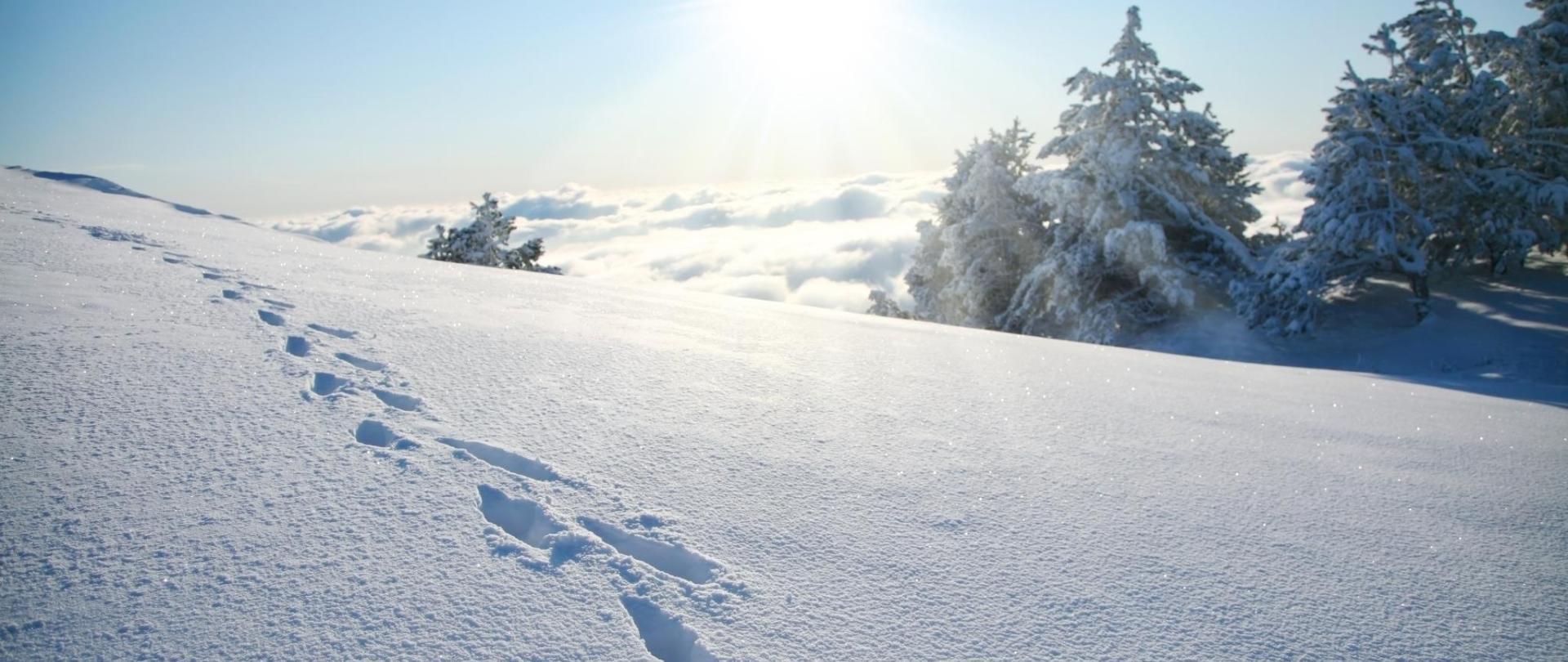 Spuren im Schnee Sonnenschein.jpg