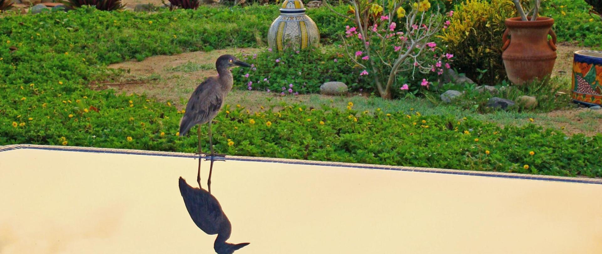 Bird on the pool cropped.JPG