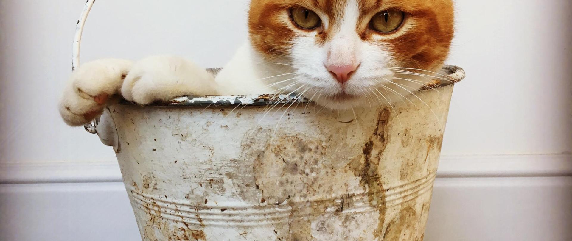 il gatto dentro al secchio.JPG