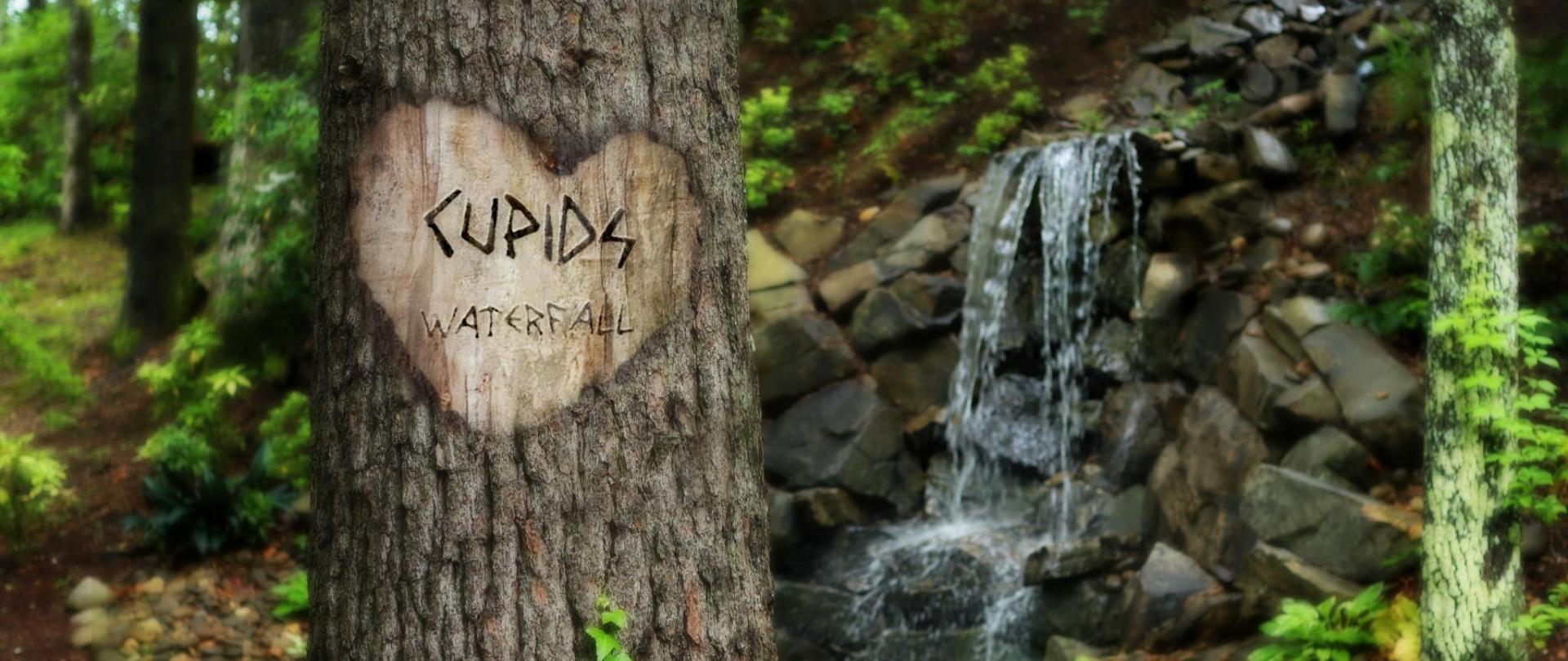 Cupids Waterfall Carved in Tree.jpg