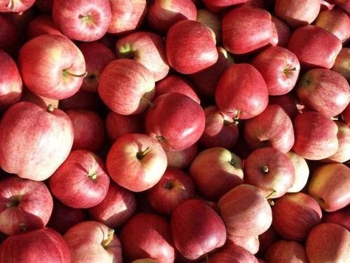 Le nostre mele
