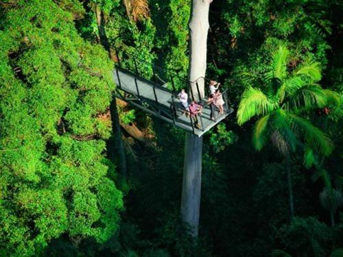 570-observation-tower3-tamborine-rainforest-skywalk.jpg