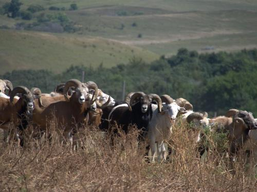 Bison Tours