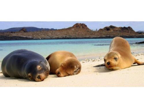 Información para el viaje a Galápagos
