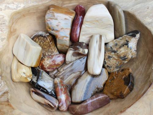 Petrified Wood Treatments
