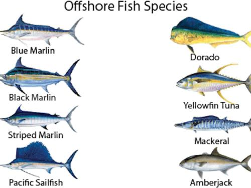 World Class Sportfishing Package