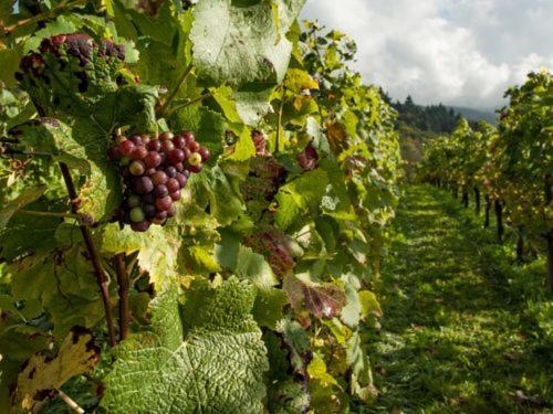 Brewery & Vineyard Tours