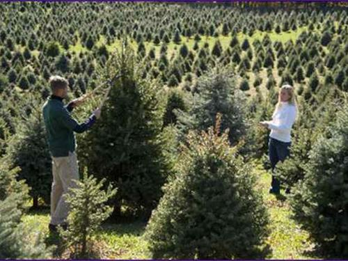 Hudson Valley Christmas Trees Package