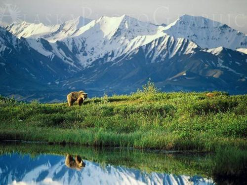 Denali Backcountry Adventure