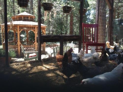 The Red Chair Travels Idyllwild!