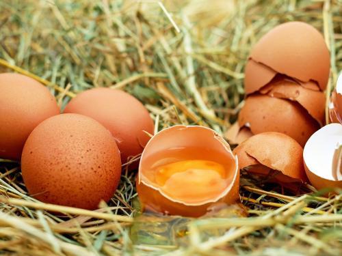 egg-1510449.jpg