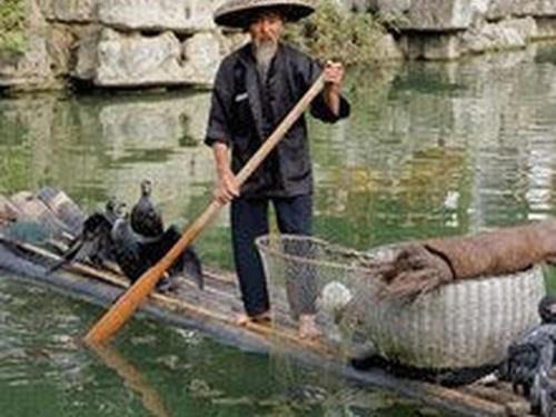 yangshuo-cormorant.jpg