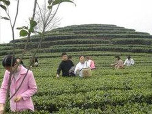 yangshuo-tea-plantation.jpg