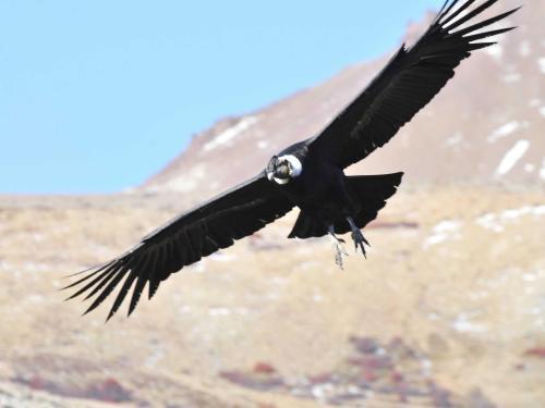 Estancia El Condor