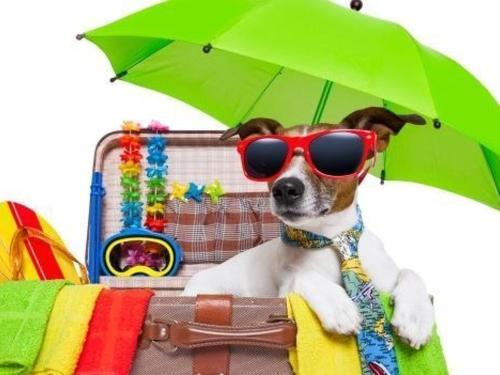 vacanze-cani-mare-marche.jpg