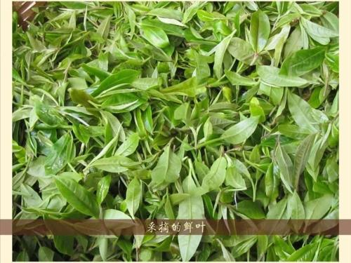 abc-tea-leaf.jpg