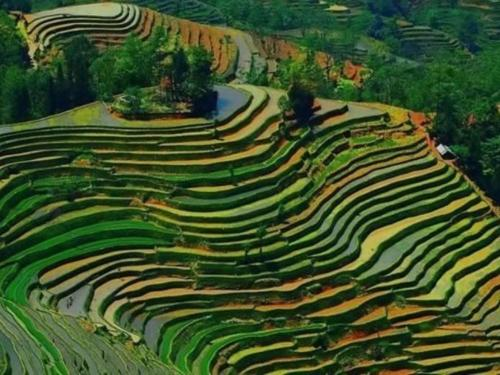 terrace-farming-rice-guilin-china.jpg