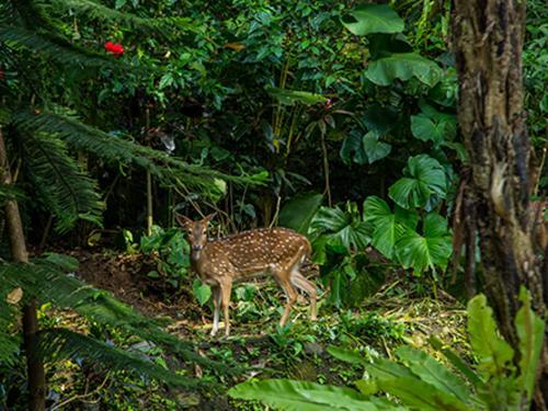 Taman Menjangan - The Deer Park