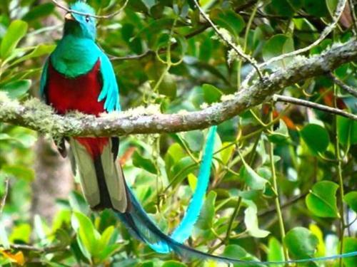 Avistamiento de aves Reserva Forestal Río Blanco Manizales