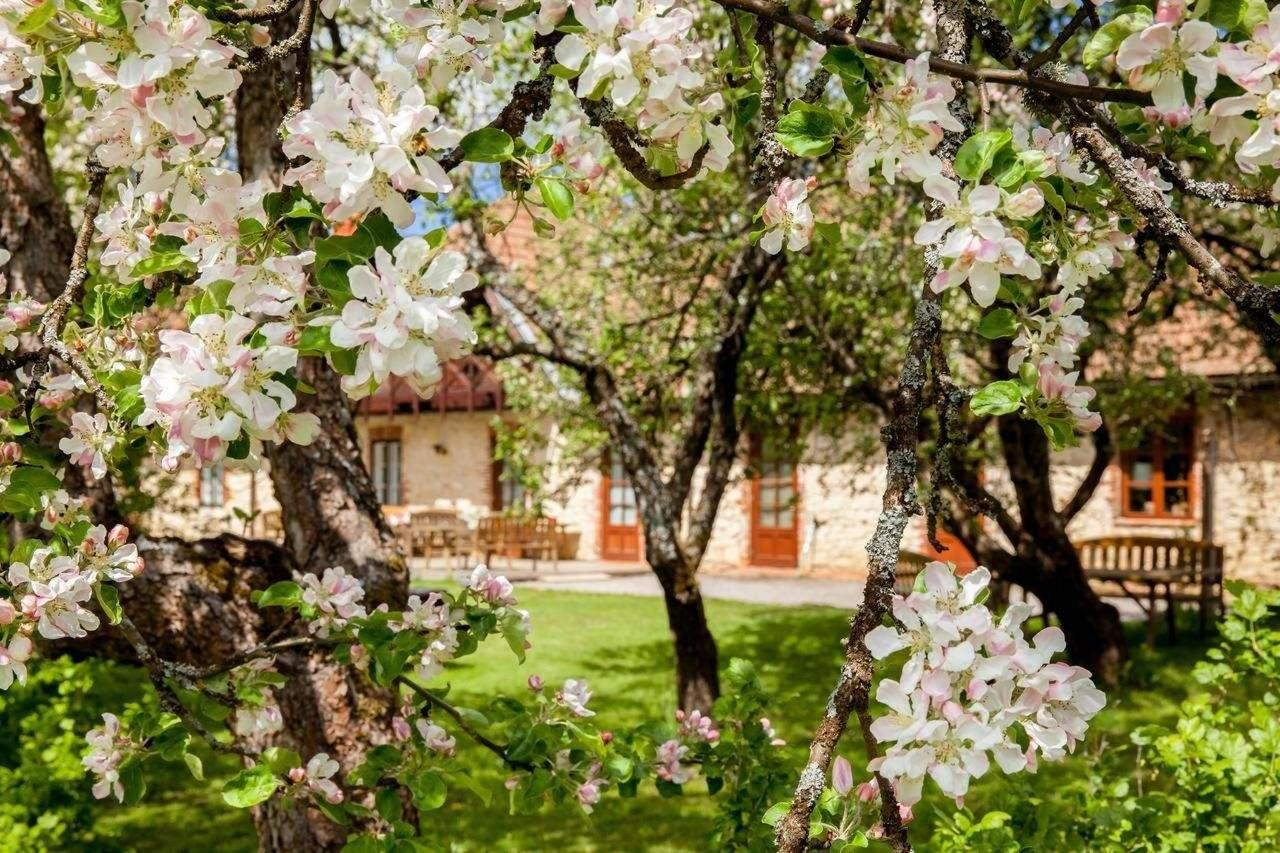 Apfelbäume blühen in Karlamuiza