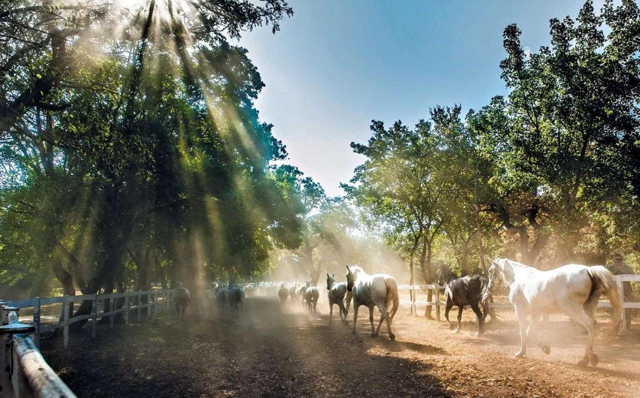 konji-v-ogradi.jpg