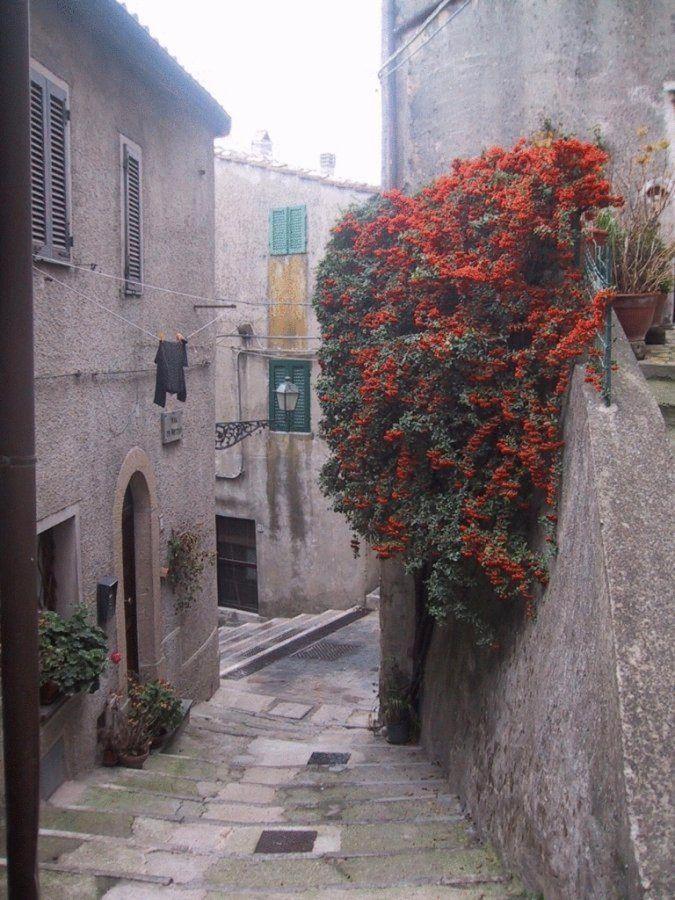 Blumen im Zentrum von Semproniano