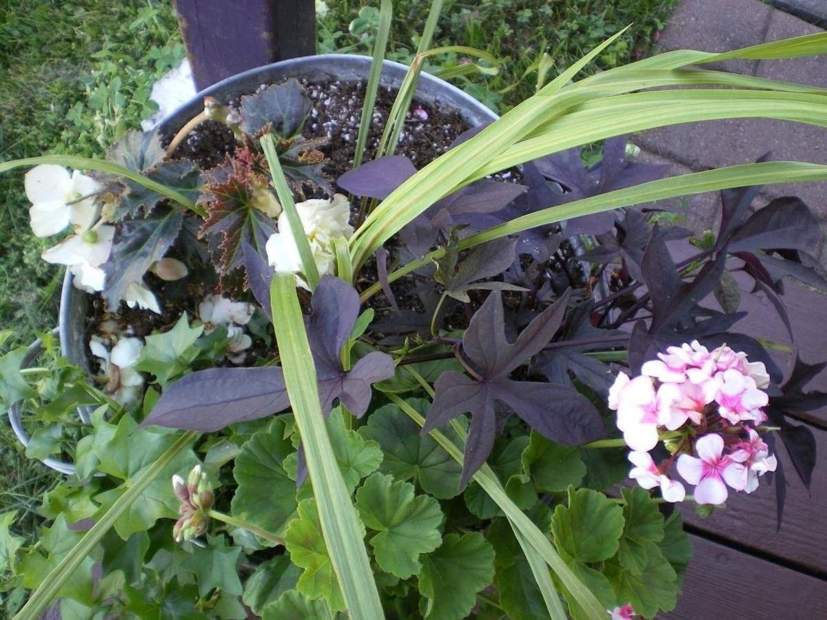 Bac Blumen