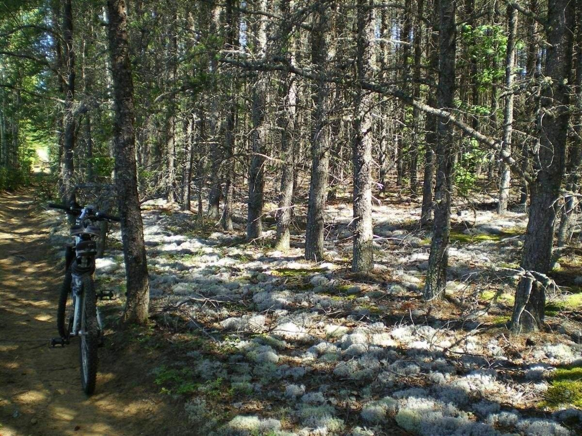 Mountain bike trail, foam