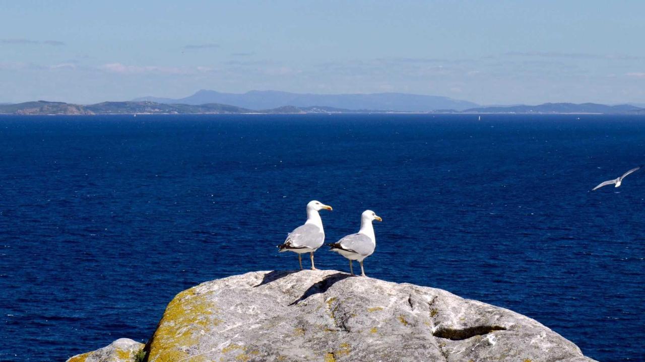 Auf der Insel Cies bei Vigo