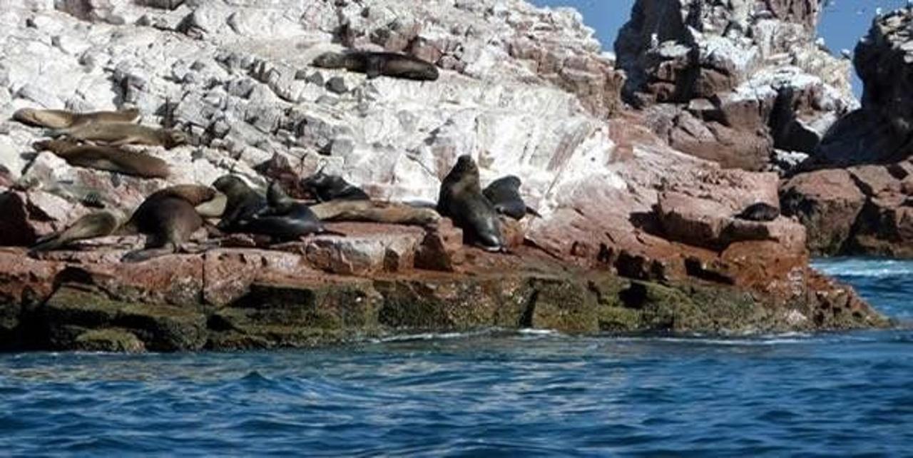 La fauna marina de las Islas Ballestas