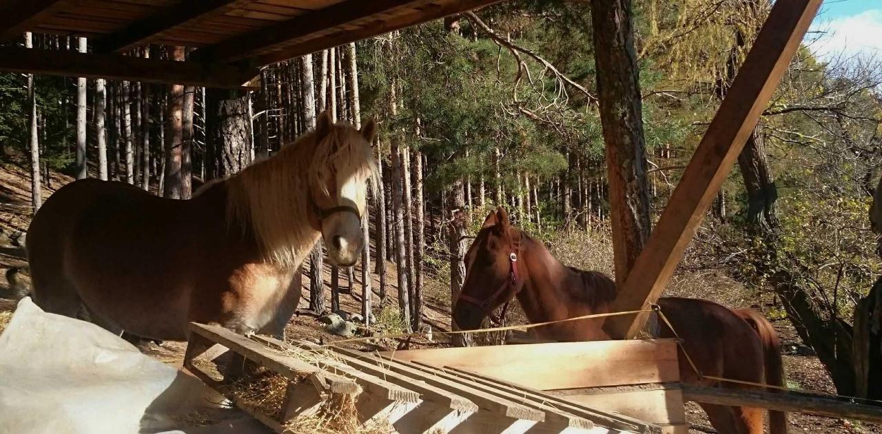 Pferde 1.jpg