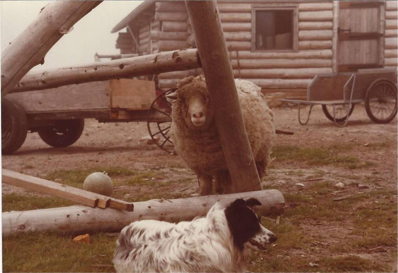 ishistory-6_tasha_sheep.jpg.1024x0.jpg