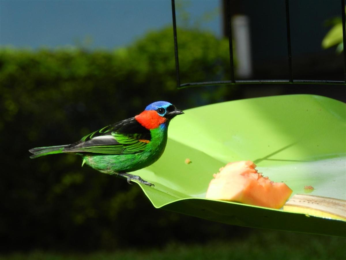 Aves (6) .jpg
