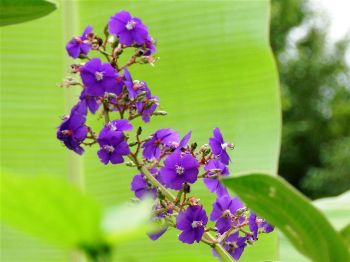 Flores y frutas Pousada Vila das Pedras (20) .jpg