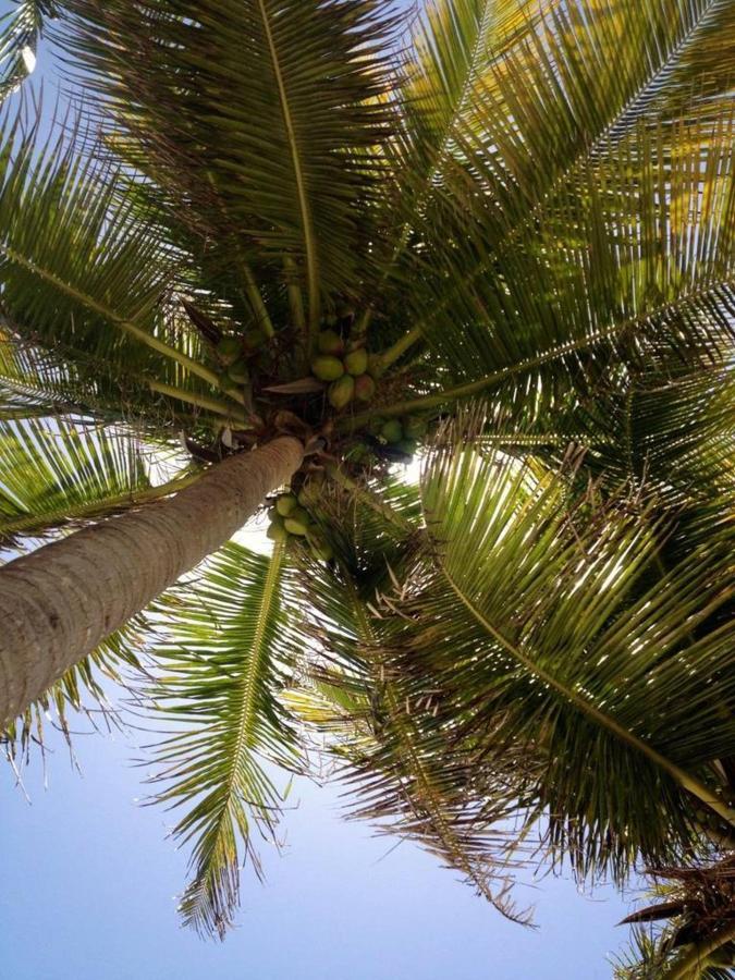 Palms - Tulum.jpg