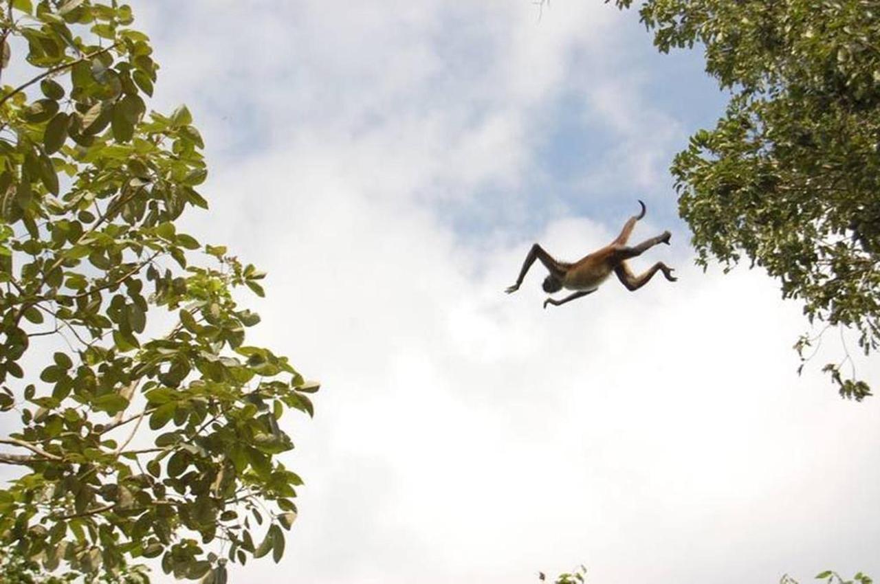 Mono araña - Tulum.jpg