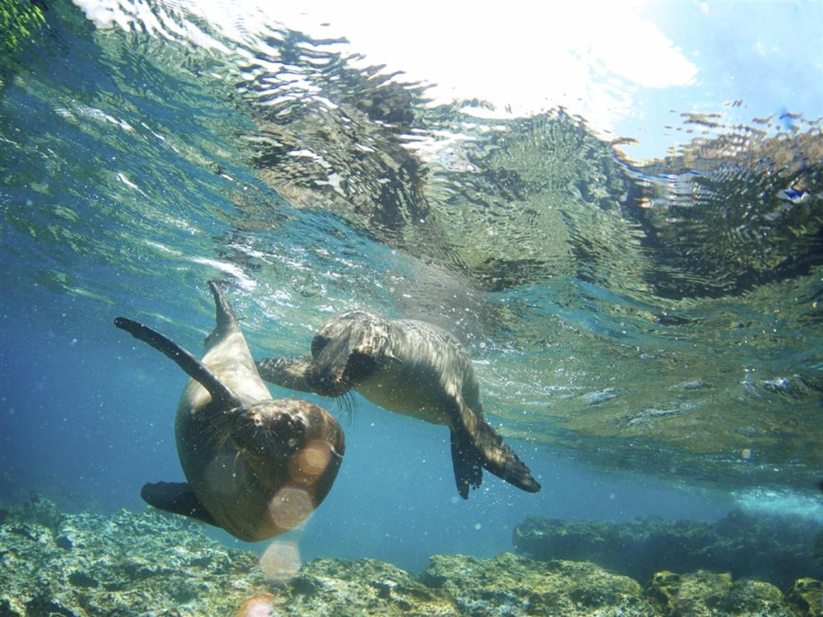 Swimming with sea lions off of Espiritu Santo island.jpg