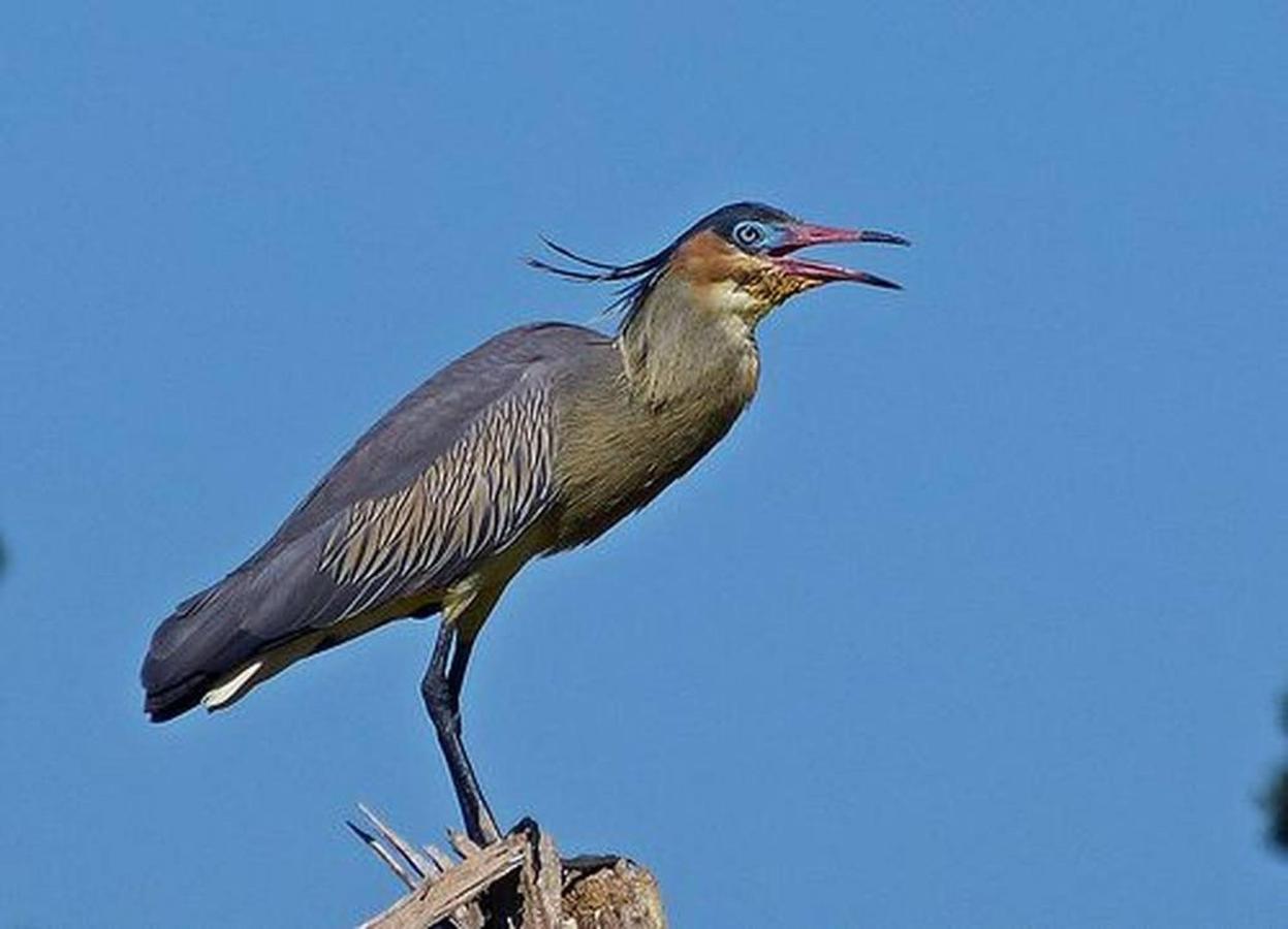 Birds of Yucuma