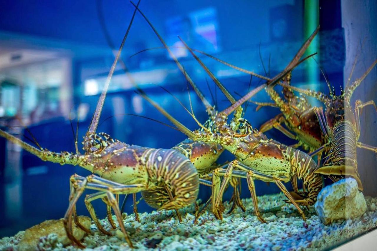Le Reve Hotel & Spa - Lobsters.jpg