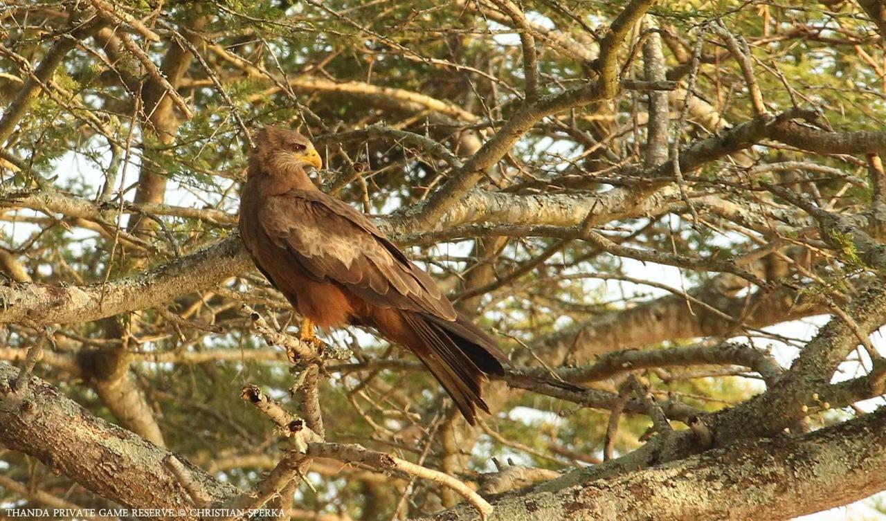 Thanda Birds