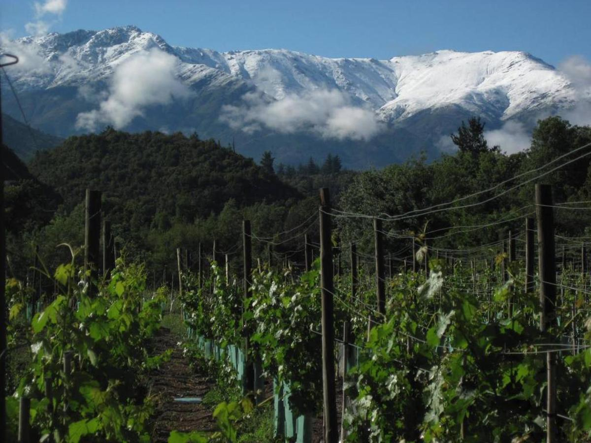 Mountain Vineyard.jpg